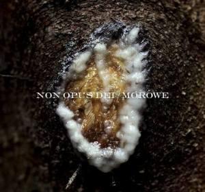 Non Opus Dei/Morowe