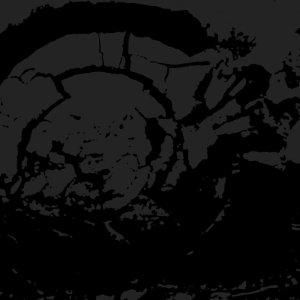 Death Vanish Misanthropos